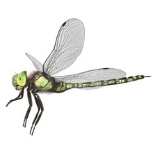 3d Rendered Southern Hawker Dr...