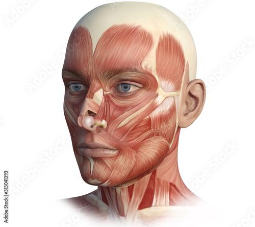 Cuadros en Lienzo Face, head, anatomy digital illustration