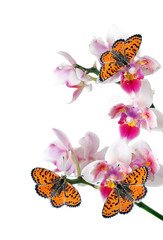 bright red butterflies and pink orchid flowers. butterflies and flowers. colorful tropical background. spotted fritillary butterfly.