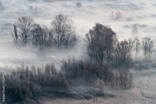 Winter landscape, the misty forest at morning