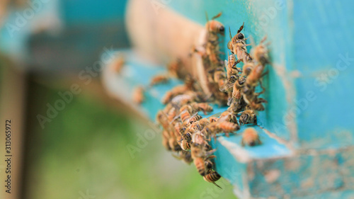 Fotografiet bees and beehive on outdoors