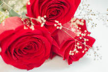 Close Up Red Roses With Dew Dr...