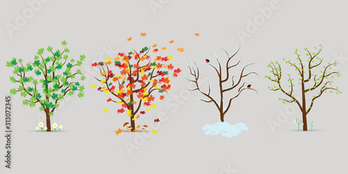 Fotografie, Obraz Vector set of four seasons trees. Flat design