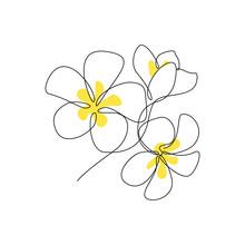 Plumeria Flowers Bunch In Cont...