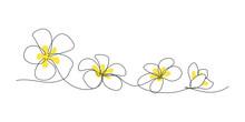 Plumeria Flowers In Continuous...