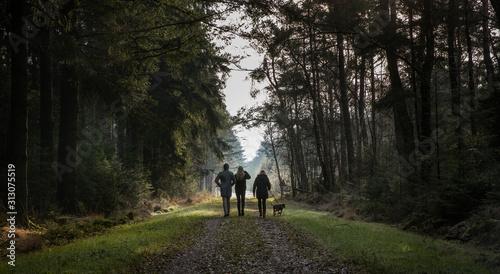 Fototapeta Walking the dog in the forest. Echten Netherlands. Drenthe. Going for a stroll.  obraz