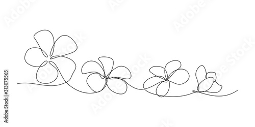 Plumeria flowers in continuous line art drawing style Canvas Print