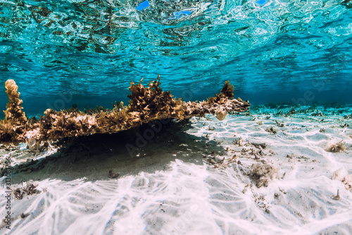 Underwater scene with corals and fish in tropical sea Fototapet