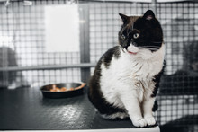 Homeless Cat Eats Food In Animal Shelter, In Background Cages For Keeping