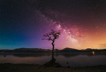 A Lone Tree With Milky Way At ...