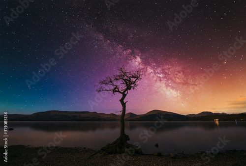 Fotomural A lone tree with milky way at the shore of Loch Lomond