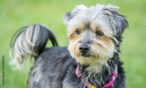Photo  portrait of dog