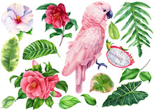 Set Of Parrot And Tropical Flo...