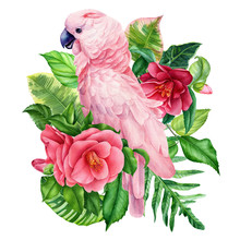 Pink Parrot And Tropical Flowerson An Isolated White Background, Watercolor Painting, Hand Drawing
