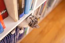 Kitten Playing In Book Shelf