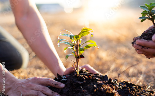 Fotografia Two men are planting trees and watering them to help increase oxygen in the air and reduce global warming, Save world save life and Plant a tree concept