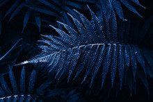Tinted Tropical Leaves In The ...