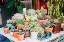 Succulents Or Cactus Succulent...