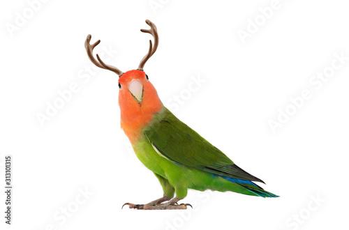 Obraz lovebird portrait with horns on a white background - fototapety do salonu