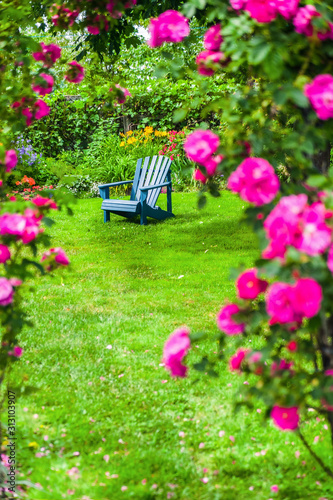 Photo A John Cabot rose climbing an arbor in a back yard garden.