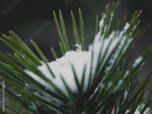 Photo Hiver en forêt