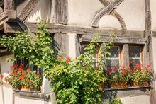 Geraniums On The Windowsill Of A Halftimbered House