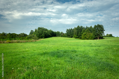 Green meadow with forest, view on a sunny day - 313117759