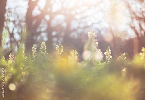 Obraz Spring flowers - fototapety do salonu