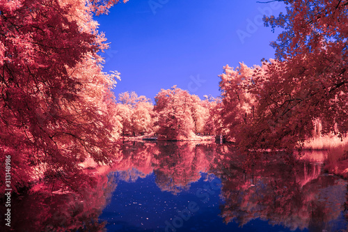Stampa su Tela Park in Infrared