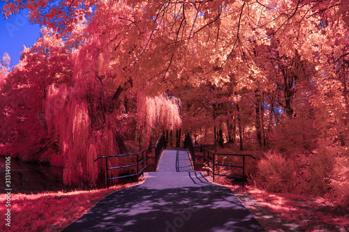 Carta da parati Park in Infrared