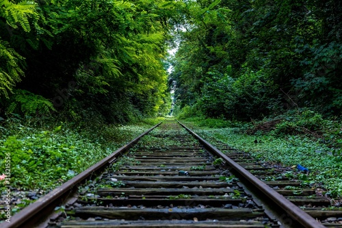 Fotomural railway in the forest