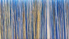Texture Of Brush Bristle. Clos...