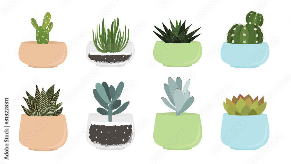 Fototapeta Various succulent and cacti in pots, vector drawing