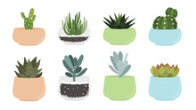 Various Succulent And Cacti In...