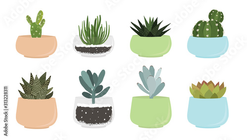 Fotomural Various succulent and cacti in pots, vector drawing