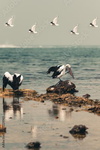 pelicans preening on the beach accidental renaissance Canvas Print