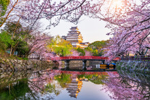 Cherry Blossoms And Castle In Himeji, Japan.