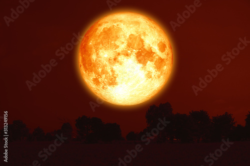 full harvest blood moon on red sky and silhouette trees Canvas Print