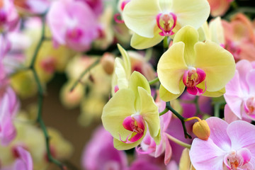colorful orchid flower garden - orchid flowers
