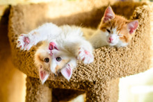 Cute Two Kittens With Pink Nos...