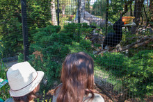 Two Children Gazing At A Rhinoceros Hornbill (Buceros Rhinoceros) In Its Cage In A Zoo