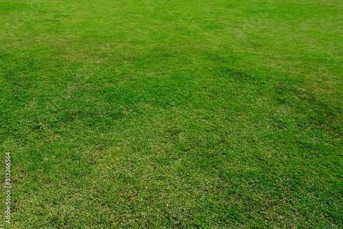 Obraz Green grass texture background, Green lawn, Backyard for background, Grass texture, Park lawn texture. - fototapety do salonu