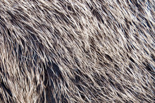 Close-up View Of The Fur Of A ...