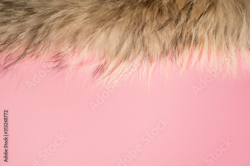 Closeup top view flatlay color photography of soft real fluffy animal fur isolated on pastel pink background Canvas