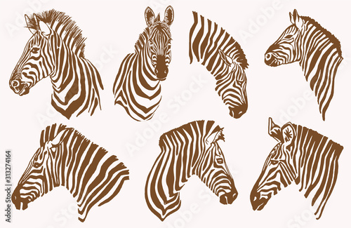 Graphical vintage set of zebra portraits , vector illustration, elements for design - 313274164