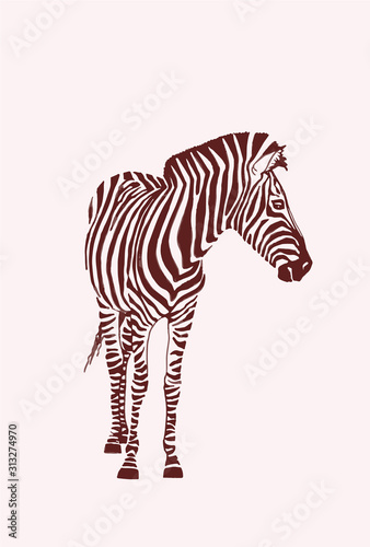 Cuadros en Lienzo Graphical vintage sketch of zebra  , vector illustration, element for design