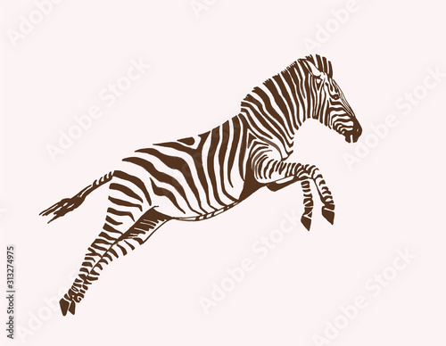Fotografía Graphical vintage sketch of zebra  , vector illustration, element for design