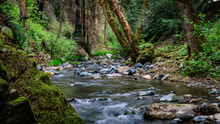 Sonoma Creek Flows Back And Forth With A Green Mossy Rock And Tall Trees At Sugarloaf Ridge State Park In Kenwood California