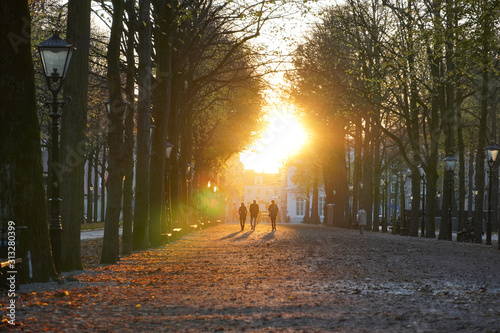 Sunset Tree Path, Lange Voorhout, The Hague, Netherlands Canvas Print