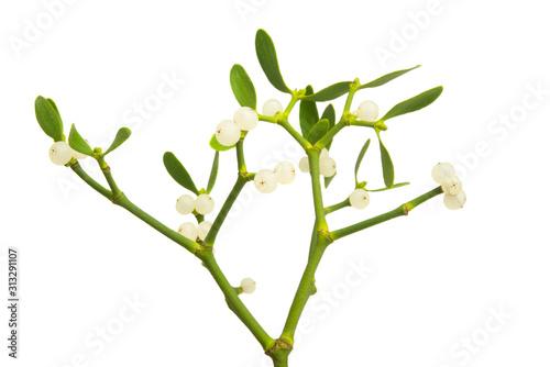 Fototapeta mistletoe